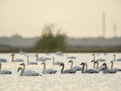 CRC releases new Waterbird Conservation Report