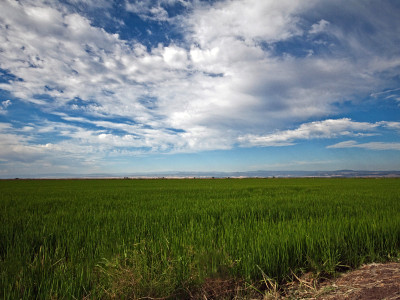 Air Resources Board adopts voluntary program to reduce Greenhouse Gases in Rice