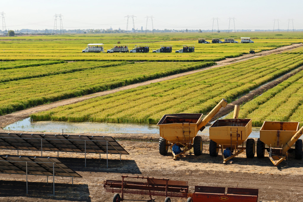 California Rice Field Day to be held next week