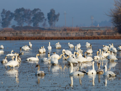 Partnerships aid Sacramento Valley Waterbirds