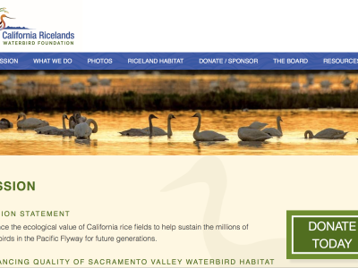 California Ricelands Waterbird Foundation Website goes Live