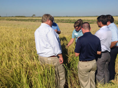 Rice Leadership Class visits California Rice Country