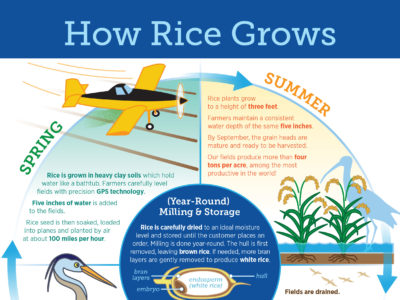 Updated How Rice Grows materials available