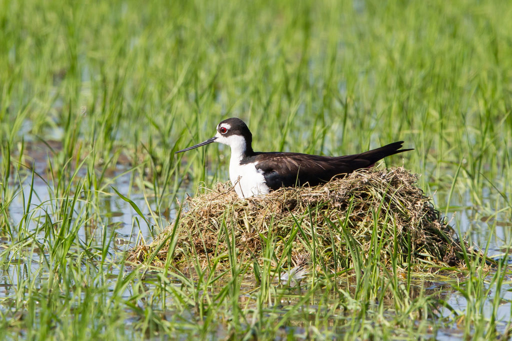 2017 CRC Nesting Cover Study—Last Call for Acres