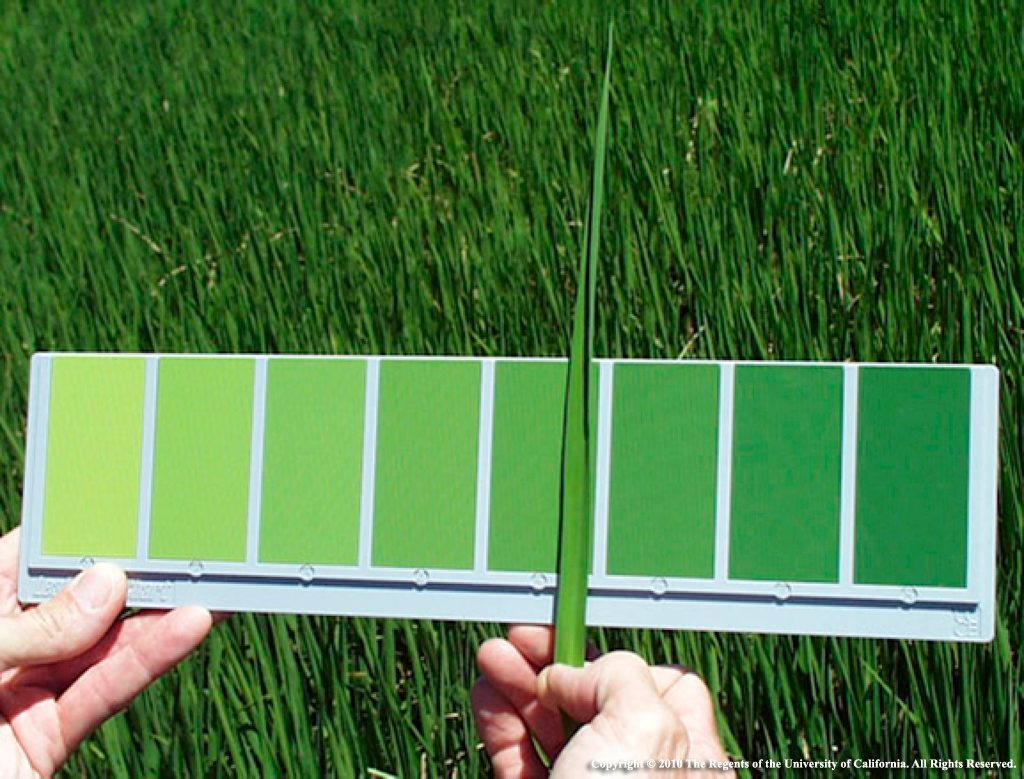 Updated Leaf Color Chart is in the Mail