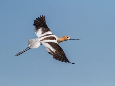 Enrollment for Ricelands Waterbird Habitat Projects currently open