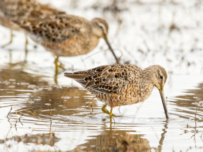 Deadlines looming to enroll into 2017 Waterbird Habitat Programs