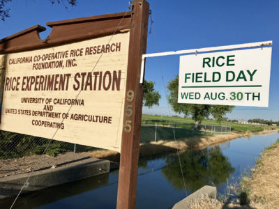 Rice Field Day coming August 30