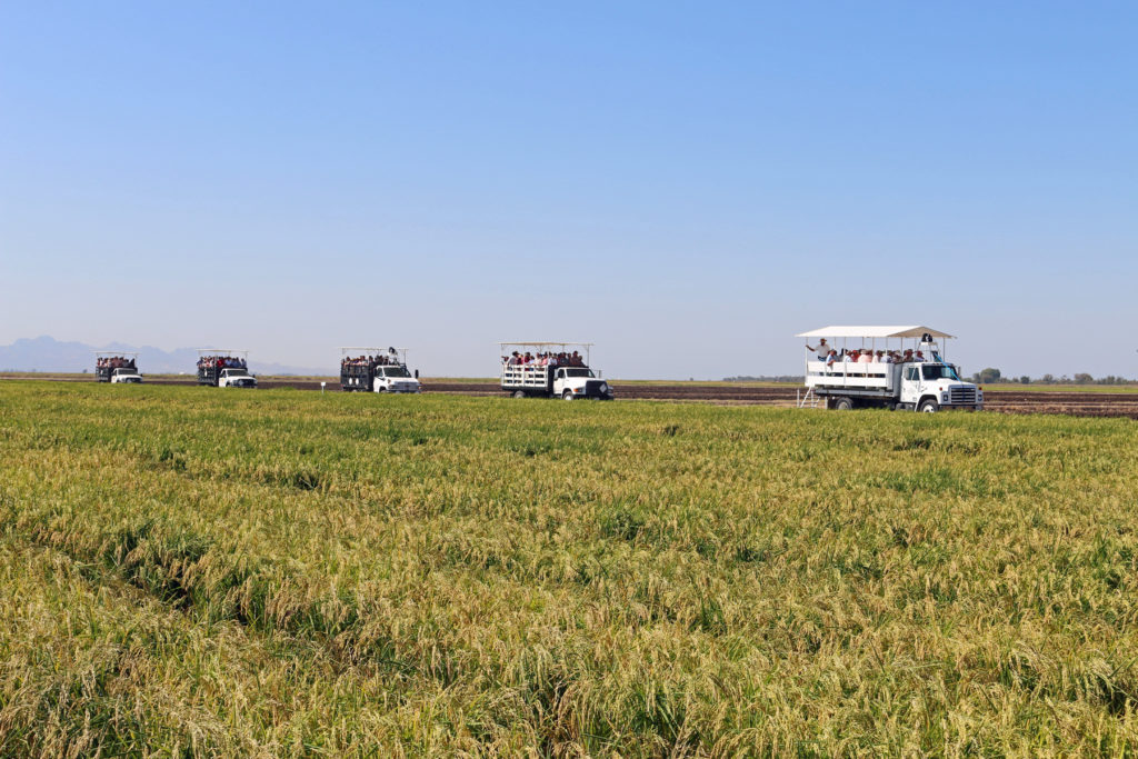 California Rice Field Day set for August 29