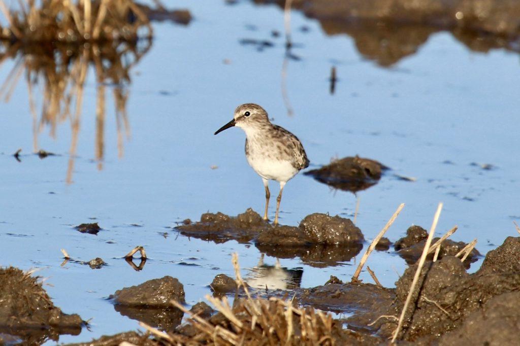 Governor Signs New Winter Rice Habitat Program Legislation
