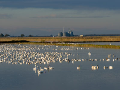 Workshop for new Winter Rice Habitat Program will be held next week