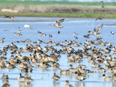 Conservation Programs Workshop planned September 5