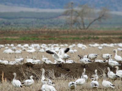 Managing an Evolving Landscape for Conservation Programs