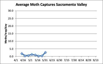Chart: Average Moth captures in Sacramento Valley, 4/1-5/31/2020