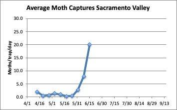 Graph: Average Moth Capture Sacramento Valley