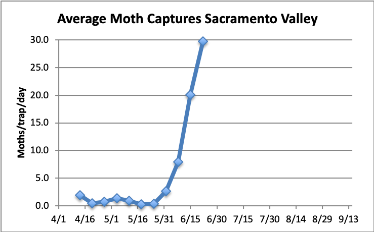 avg moth captures, sacramento valley 4/1-6/15