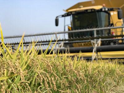 Rice part of Upcoming Sacramento Valley Pest Management Webinar