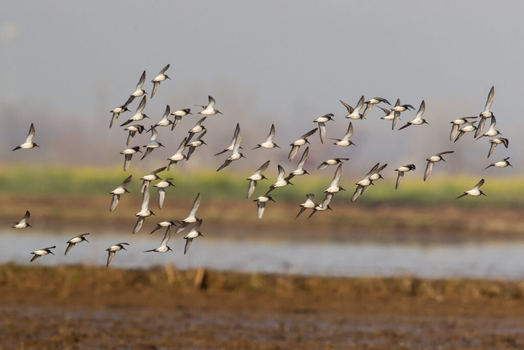 Deadline Fast Approaching for Bid4Birds Habitat Program