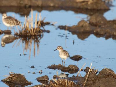 Important Enrollment Deadline for Nesting Cover and Shorebird Programs