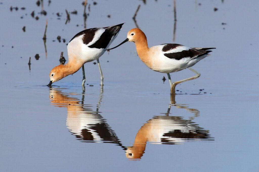 Bid4Birds Habitat Program Updates