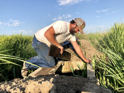 UCCE Provides insight on Rice Field Draining