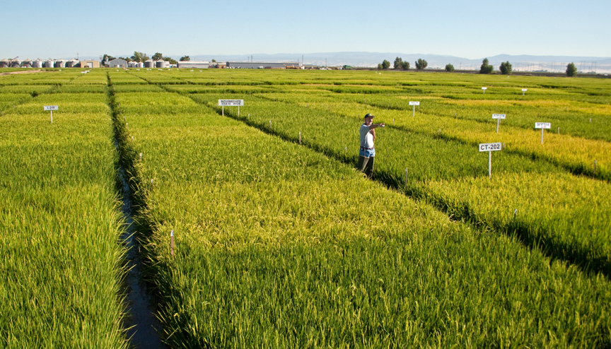 Rice Field Day Coming Next Week