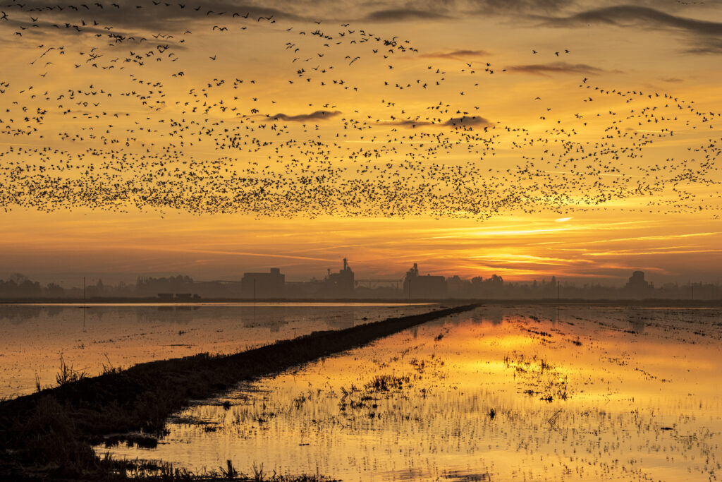 Deadline to apply for Drought Relief Waterbird Program fast approaching