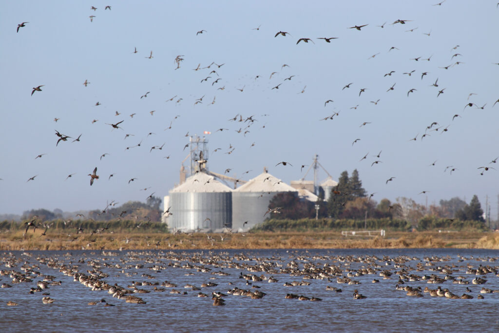 Flooding Opportunities – Drought Relief Waterbird Program